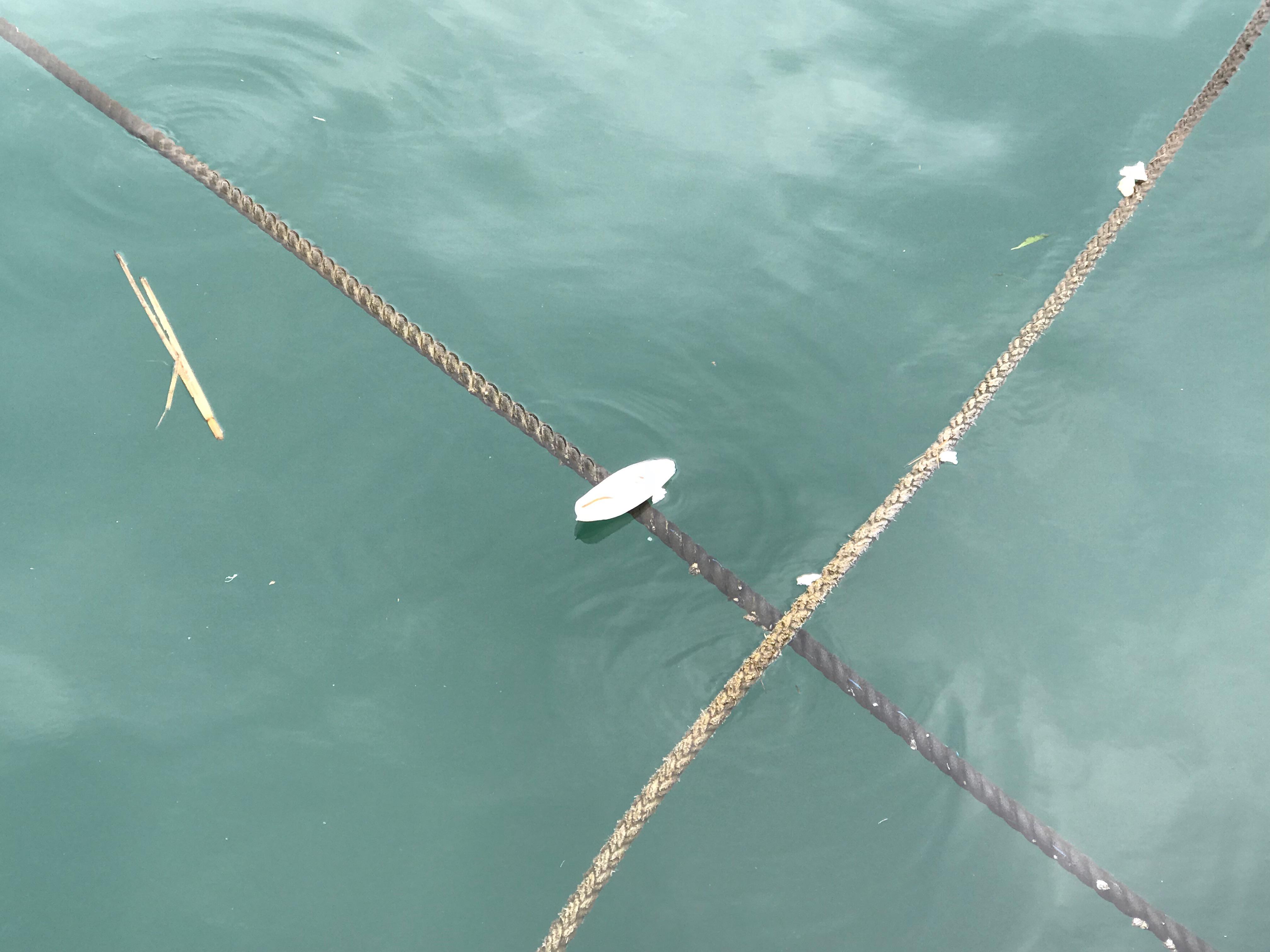 深江漁港にてコウイカの甲を発見